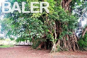 Travel Guide: Baler | Lakwatsero