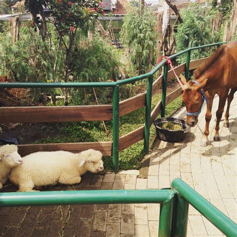 farm house lembang menggali kembali kenangan  eropa