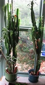 23 best Dirt Road: Basement: Cactus images on Pinterest ...