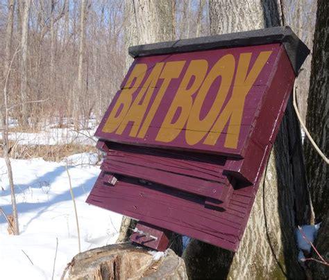 diy bat house plans   attract  natural