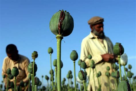 news afghanistan 12 ways your tax dollars were squandered in afghanistan