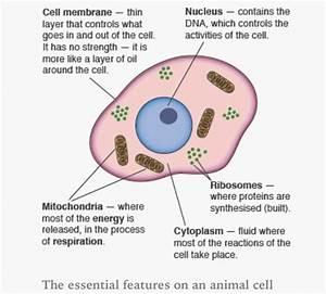 Gcse Edexcel Biology Topic 1