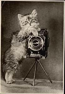 fluffy kitten holding a cats