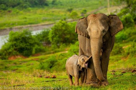 Critically Endangered Species That Are Threatened By Humans