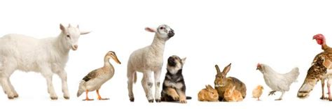 where to adopt a puppy policies rspca australia
