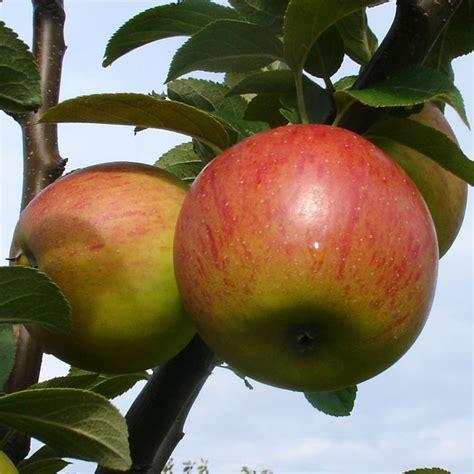 Miete Für Den Herz Apfel Garten Für 3 Apfel Goldparmäne Der Herzapfelhof Im Alten Land