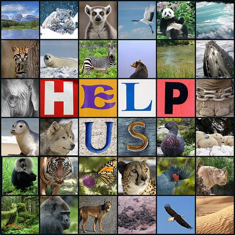 Animal Rights Wallpaper - animal rights images save us wallpaper and background