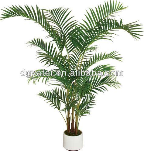 Fausse Plante Exterieur Fausse Plante Verte Exterieur Photos De Magnolisafleur