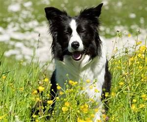 Urlaub Mit Hund Im Allgu Hrnerdrfer