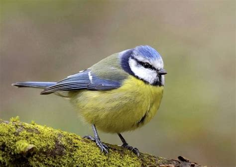 small birds small birds bounce back in rspb s garden survey environment eastern daily press