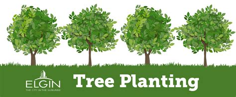 how to plant a tree planting www pixshark com images galleries with a bite