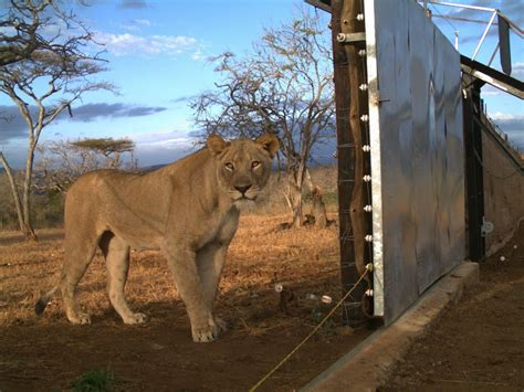 Family Devastated After Lioness Kills Woman