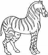 Zebra Coloring Pages Stallion Zebras Animal Printable Colornimbus Fish Empty Bowl Horse sketch template