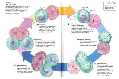 download meiosis and cell division