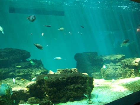 aquarium talmont st hilaire talmont st hilaire holidays in vendee and ile d oleron holidays in vendee