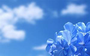 Blue sky, blue flower wallpaper | Download HD Wallpapers ...