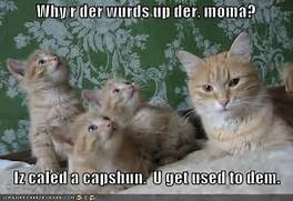 Funny cat pictures wit...