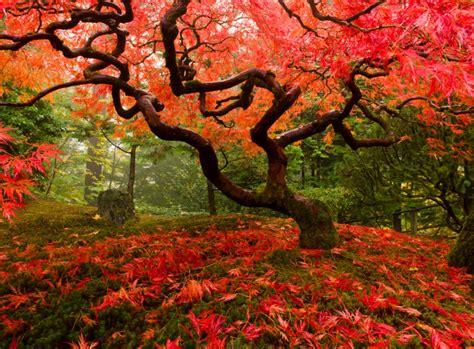 Kleiner Garten Im Herbst by Japanischer Ahorn Farbenfrohe Gartengestaltung
