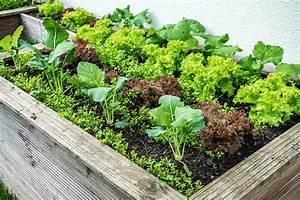 Hochbeet Blumen Bepflanzen : hochbeete bepflanzen blumen erde kr uter gestaltung ~ Watch28wear.com Haus und Dekorationen
