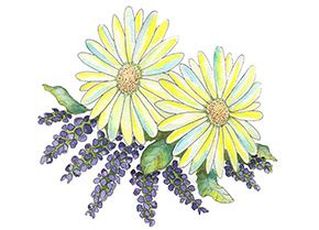 lavender chamomile fragrance oil  oz  ml dropper