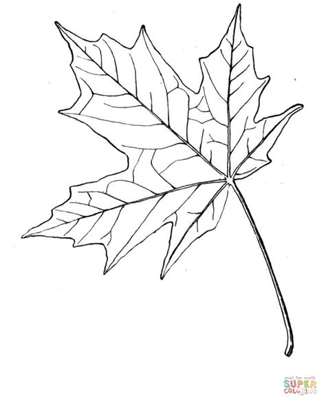 maple leaf drawing template  getdrawingscom