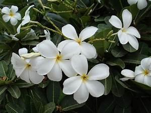 white | Naturally Beautiful... | Page 2