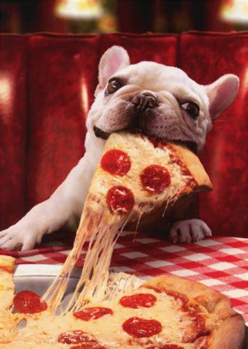 dog  cheesy pizza slice funny bulldog birthday card