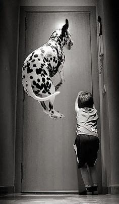 kids  dogs images funny animals dog cat