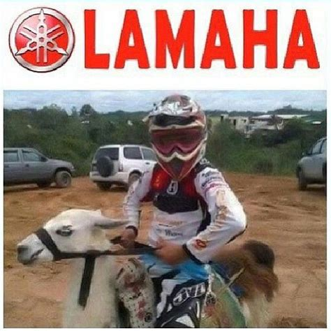 Funny Motocross Memes - what you ve need heard of it before motocross pinterest you ve dirt biking and motocross