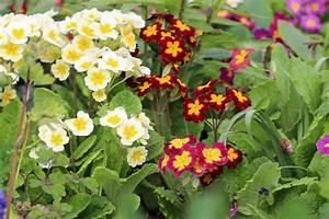 Blühende Pflanzen Winterhart : topfpflanzen 26 beliebte bl hende winterharte sorten ~ Michelbontemps.com Haus und Dekorationen