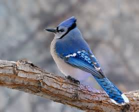 cnu ornithology spring 2013