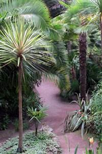 Plantes Exotiques Rustiques : arbuste exotique rustique pivoine etc ~ Melissatoandfro.com Idées de Décoration