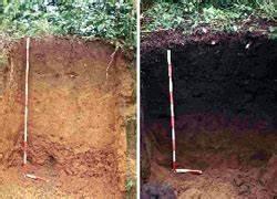 Terra Preta Kaufen : schwarze erde in amazonien brasilienportal ~ A.2002-acura-tl-radio.info Haus und Dekorationen