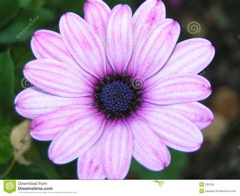 pink or purple flowers pink purple flower stock photo image of pretty summer 233766