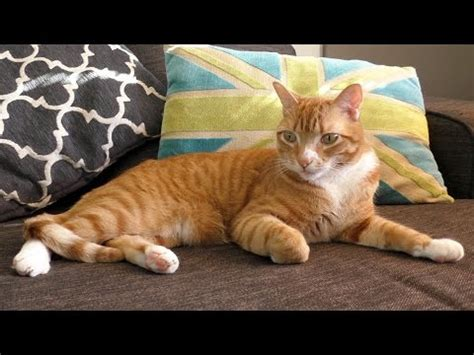 fiv cats positively adoptable youtube