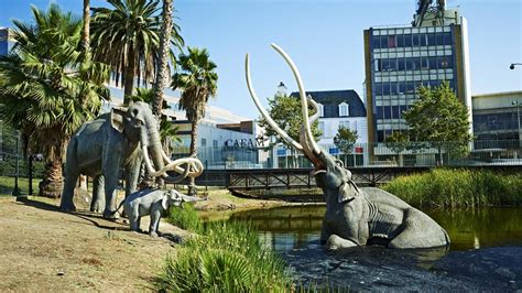 10 Fascinating Facts About The La Brea Tar Pits