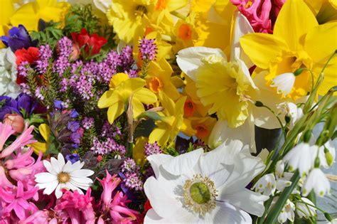 wholesale garden sussex flower farm
