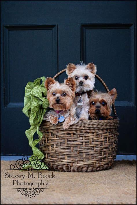 puppy photo ideas ideas  pinterest dog
