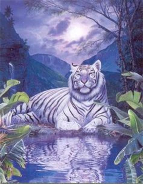 white tiger face beautiful search   love