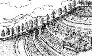 Agricultural Farming Drawing