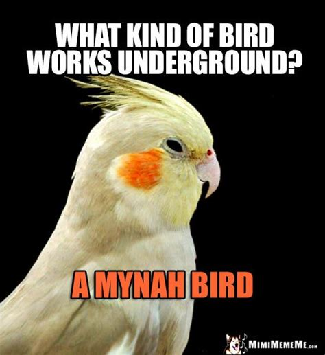 Cockatiel Memes - 75 best funny bird memes images on pinterest funny birds hilarious stuff and hilarious