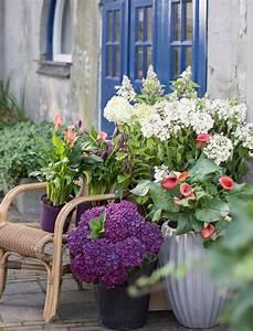 Wann Schneide Ich Hortensien : ich schenke euch eine hortensie ~ Frokenaadalensverden.com Haus und Dekorationen
