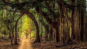 Ranthambore, Trees, U2013, Bing, Wallpaper, Download