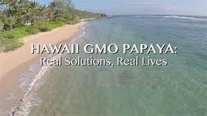 Hawaii GMO Papaya: Real Solutions, Real Lives - YouTube