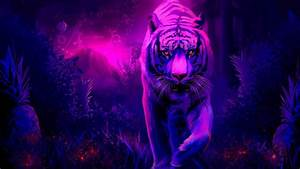 Tiger Full HD Wallpaper and Background Image | 1920x1080 ...
