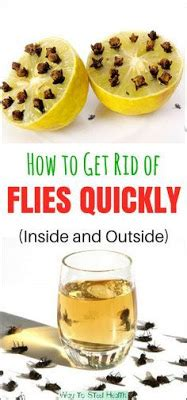 how to get rid of flies outside on patio how to get rid of flies quickly inside and outside