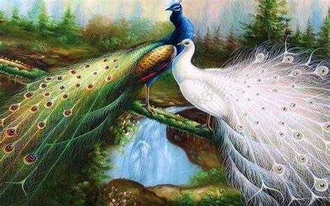 Animated Peacock Wallpapers - peacock wallpaper roaming in garden 3d hd wallpaper