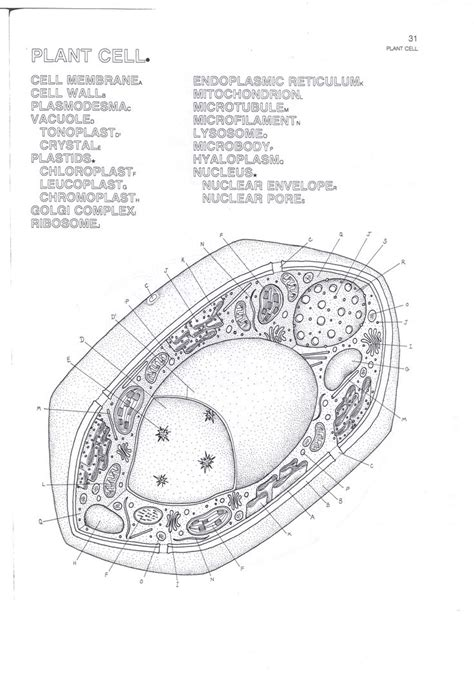 plant cell coloring key plant cell answer key coloring pages