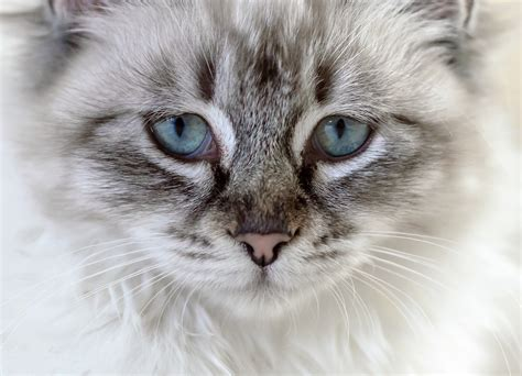 images animal kitten close  nose whiskers