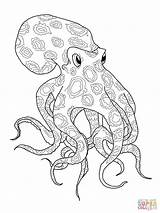 Octopus Ringed Coloring Printable Drawing Dot Paper sketch template